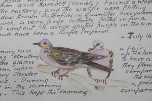 Shabby chic vintage bird picture 00370