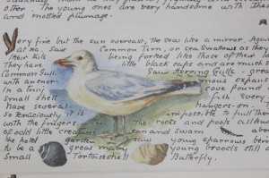 Shabby chic vintage bird picture 00372