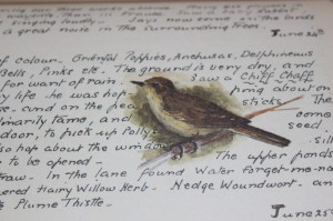 Shabby chic vintage bird picture 00373