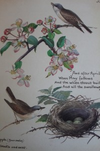 Shabby chic vintage bird picture 00390