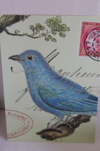 Shabby chic vintage bird picture postcard 00455