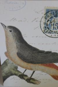 Shabby chic vintage bird picture postcard 00461