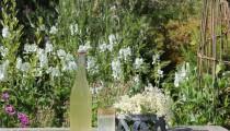 Best and Easiest Elderflower Cordial Recipe